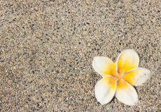 Plumeria flower on a background Royalty Free Stock Images