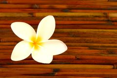 Plumeria flower on bamboo Stock Photo