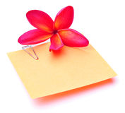 Plumeria Flower and Blank Memo Stick Stock Image