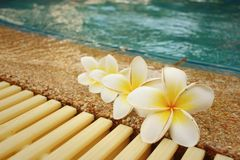 Plumeria flower and blue swimming pool rippled water detail Royalty Free Stock Images