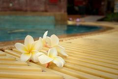 Plumeria flower and blue swimming pool rippled water detail Royalty Free Stock Image