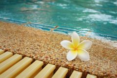 Plumeria flower and blue swimming pool rippled water detail Royalty Free Stock Photos