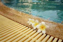 Plumeria flower and blue swimming pool rippled water detail.  Stock Image