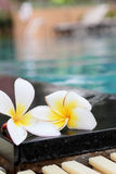 Plumeria flower and blue swimming pool rippled water detail Stock Image