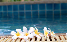 Plumeria flower and blue swimming pool rippled water detail Stock Photography