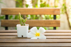 Plumeria flower and cactus put on wooden table Stock Photography