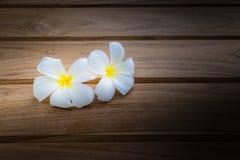 Plumeria flower on dark stock photos