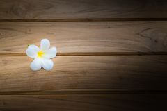 Plumeria flower on dark royalty free stock images