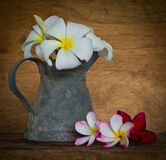 Plumeria flower Stock Images