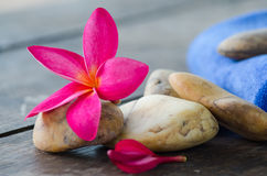 Plumeria flower and Fabric with stone. Concept of spa, treatment, relaxation and nature royalty free stock images