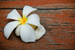 Plumeria flower, Frangipani, and stone Royalty Free Stock Photo