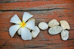 Plumeria flower, Frangipani, and stone Stock Image