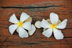 Plumeria flower, Frangipani, and stone Stock Photo