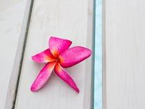 Plumeria flower Royalty Free Stock Image
