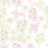 Plumeria flower graphic color seamless pattern background sketch illustration vector Stock Images