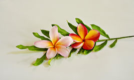 Plumeria flower with green leaf Royalty Free Stock Photography