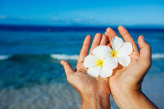 Plumeria flower in hands over water Royalty Free Stock Images