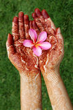 Plumeria flower in henna hands Stock Images