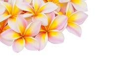 Plumeria flower isolated Stock Photo