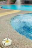 Plumeria flower near pool. A single plumeria flower near a swimming pool Royalty Free Stock Image