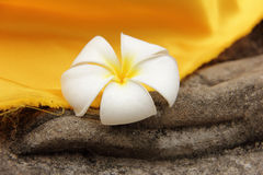 Plumeria flower rested on a Buddha statue's hand Royalty Free Stock Images