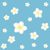Plumeria flower sweet Backgrounds. For cute work Stock Photography