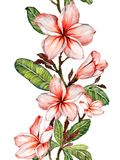 Plumeria flower on a twig. Border illustration. Seamless floral pattern. Isolated on white background. Watercolor painting. Hand drawn royalty free illustration
