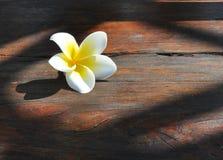 Plumeria flower Royalty Free Stock Photos
