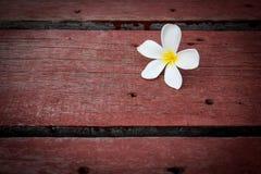 Plumeria flower on wood floors. Plumeria flower on the old wood background Royalty Free Stock Photos