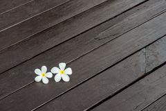 Plumeria flower. On wood texture Royalty Free Stock Photography
