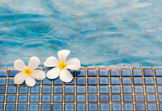 Plumeria flower. On pool texture Royalty Free Stock Photo