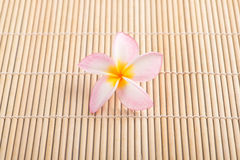 Plumeria flower. On wood texture Stock Images