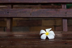 Plumeria flower on wood Stock Photos