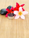 Plumeria flowers arrangement Royalty Free Stock Photos
