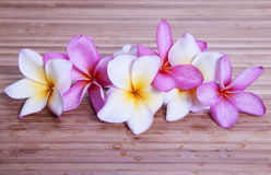 Plumeria Flowers. On bamboo background Stock Photography