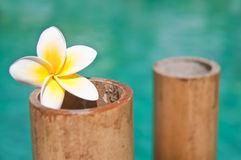 Plumeria flowers on bamboo trunks, blue water Stock Photography