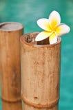 Plumeria flowers on bamboo trunks, blue water Stock Image