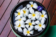 Plumeria flowers in the basin Stock Photo