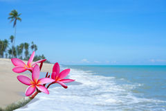 Plumeria flowers on the beach. With blue sky background Royalty Free Stock Photos