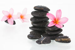Plumeria flowers and black stones close-up Stock Images