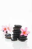 Plumeria flowers and black stones Stock Image