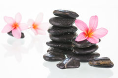 Plumeria flowers and black stones Stock Photography