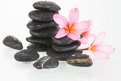 Plumeria flowers and black stones Stock Photo