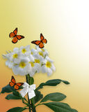 Plumeria flowers and butterflies Royalty Free Stock Image