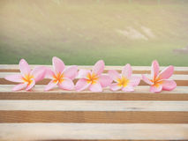 Plumeria flowers on dry wood. Royalty Free Stock Images