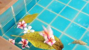 Plumeria Flowers Floating in Water. Beautiful plumeria flowers floating in water background stock footage