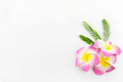 Plumeria flowers. Isolated on white background Royalty Free Stock Photography