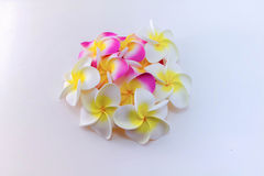 Plumeria flowers. Isolated on white background Stock Images
