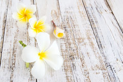 Plumeria Flowers On A Wooden Background Stock Photos