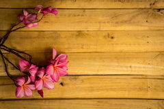 Plumeria, flowers, red flowers, wood floors, textured, red, pink, plants, trees. Royalty Free Stock Images